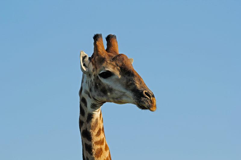 """Reisebericht: """"Safari in der Nähe von Kapstadt"""""""